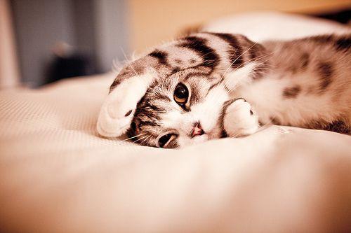 :): Kitty Cats, Sleepy Kitty, Cute Cats, So Cute, Mondays Mornings, Cute Kitty, Hello Kitty, Cute Kittens, Animal