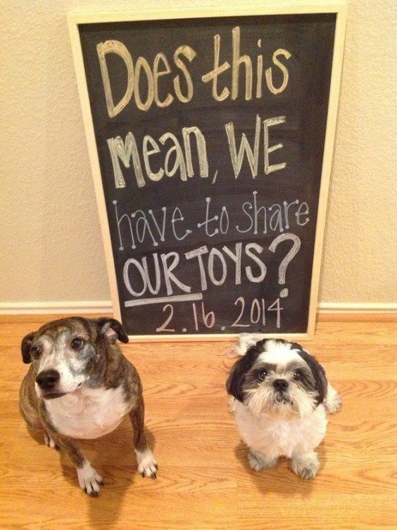46 best Pregnancy Announcements images – Witty Baby Announcements