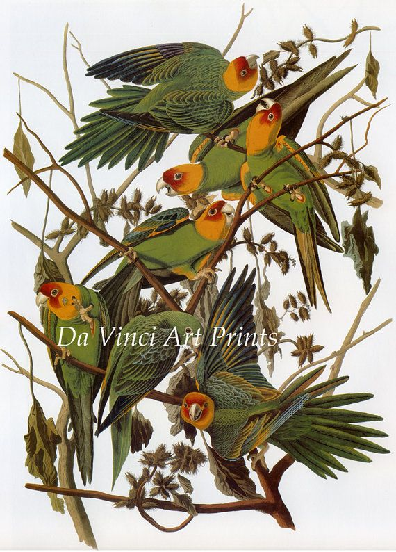 Hey, I found this really awesome Etsy listing at https://www.etsy.com/au/listing/86115283/john-james-audubon-reproductions-birds