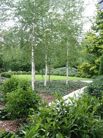 Personable  Best Images About Landscaping On Pinterest  Sun Perennials  With Fair Silver Birch With Ajuga Planted Under Them As Ground Cover Arthur  Lathouris Landscape And Garden With Cool Gardeners World Monty Don Also  Merchiston Gar