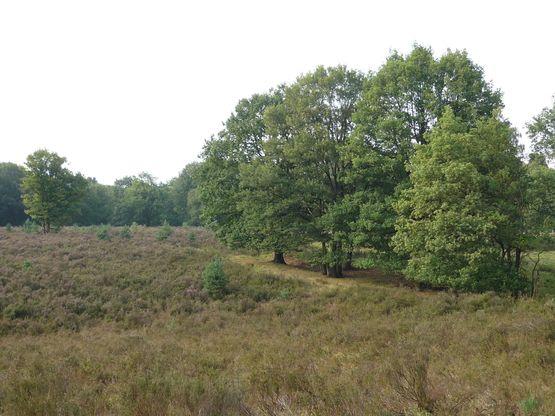 Meinweg dag 2 (NS-route, 2-daags) | Wandelnet