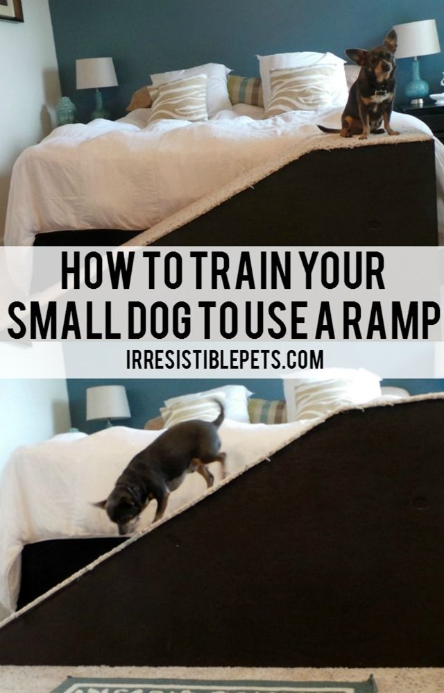 Can You Train A Cat To Use A Dog Door