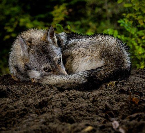 "beautiful-wildlife: "" Good Sunday Morning by Topo Photo """