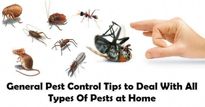 Residential To Commercial Pest Control Services Fumigation And Anti Termite Services In Dubai Contact Us To Get Rid Of Pest Termite Control Pest Control Pests