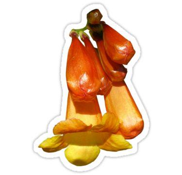Orange Flower with Buds Sticker by StickerNuts