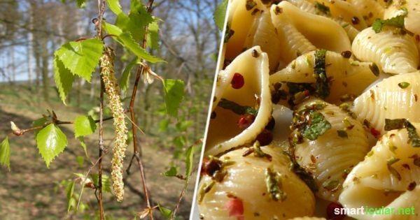 10 Leckere Rezepte mit Birkenknospen und Birkenblättern