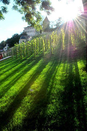 Czech Republic, Prague, picture, city, park, light, sun, rays, green, summer