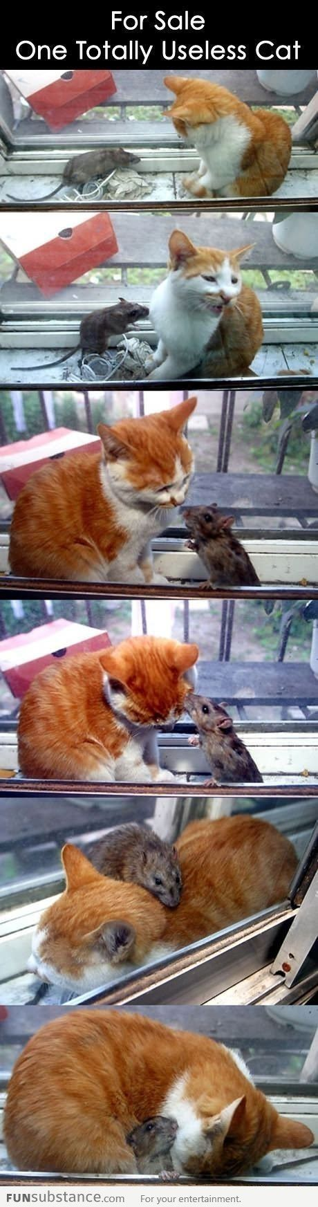 Cat and mouse relationship