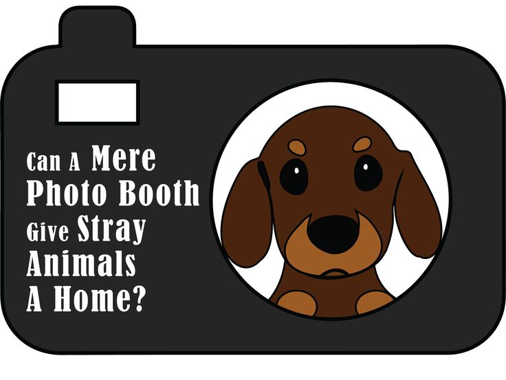 Can A Mere Photo Booth Give Stray Animals A Home? Some people in Boulder, Colorado, are using photo booths to spread awareness about homeless pets and work along with the animal rights organizations to help stray animals find a place to live.