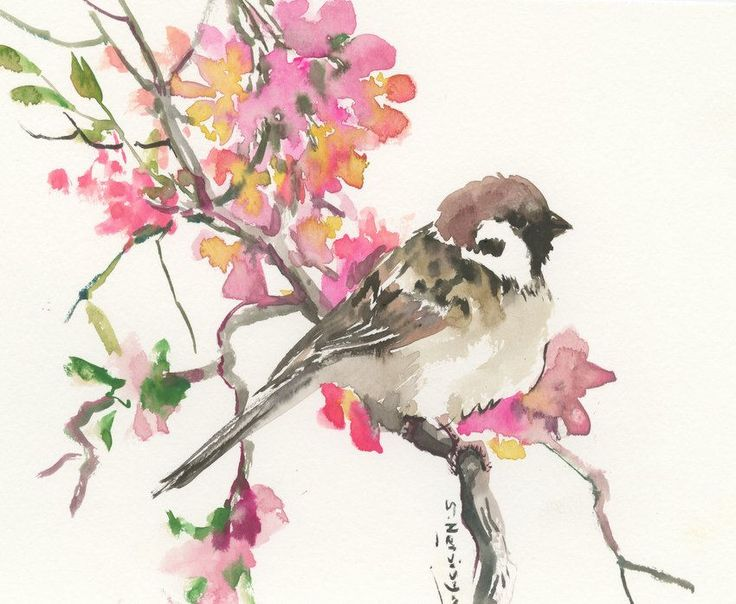 Sparrow And Spring Blossom art, 10 X 8 in, original watercolor painting  sparrow art, sparrow painting, bird art, sparrows, yard birds, by ORIGINALONLY on Etsy