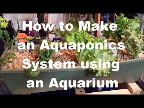 1000 images about aquaponics self cleaning aquarium on pinterest 3 gallon fish tank. Black Bedroom Furniture Sets. Home Design Ideas