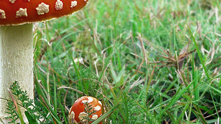 Gespot in de tuin: paddenstoelen (bodemhelden!) - Doe-tips - Veldverkenners