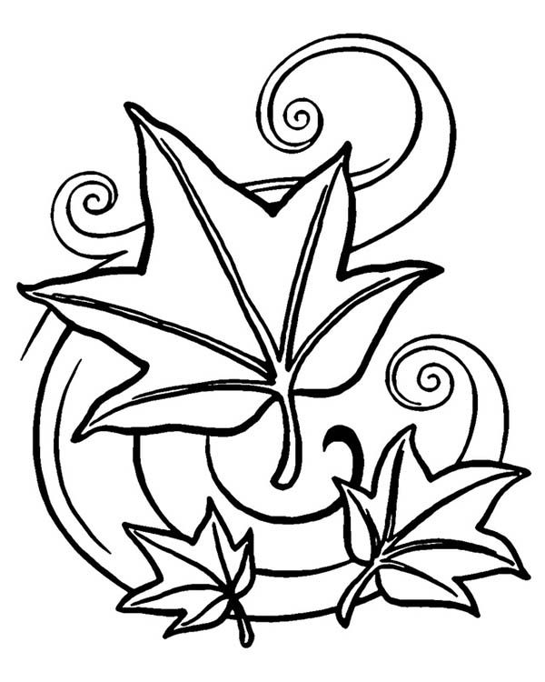 the 71 best images about coloring pages on pinterest coloring pages of leaves free printables