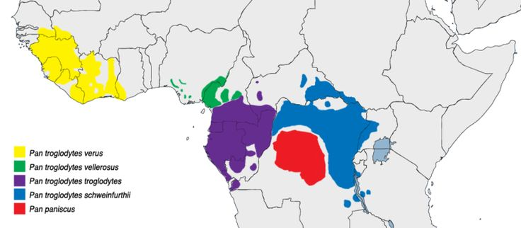 Pan distribution : Distribution of Pan troglodytes (common chimpanzee) and Pan paniscus (bonobo, in red)
