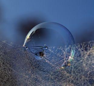 water bubble in web  / Kent Mathiesen