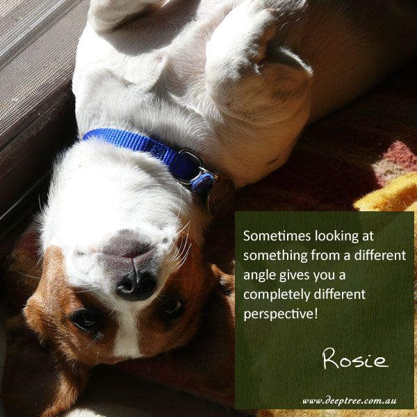 We all view the world through our own set of filters (values, beliefs, experiences). If you can step inside the shoes of another you can gain a very different perspective on things.  #Rosie #Rosiesays #inspiration #wisdom  www.deeptree.com.au