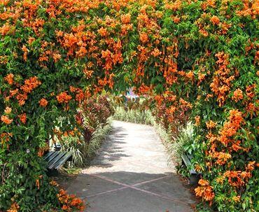 Вьющиеся растения - Загород - дом, сад, огород - ДОМ,САД,дизайн,декор - Каталог статей - ЛИНИИ ЖИЗНИ