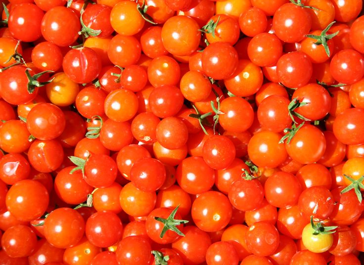 Best Natural Light For Growing Tomatoes Outdoors