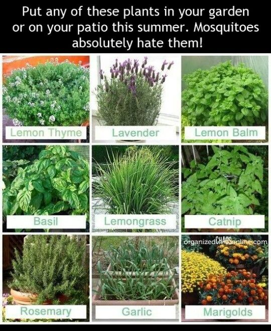 Pin By The Dragonfly Collections On Must Read Plants