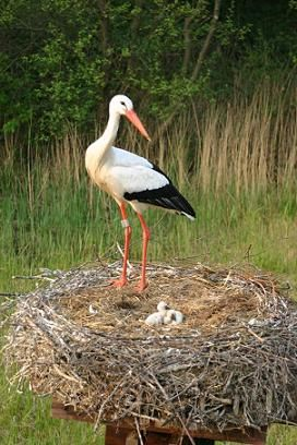 Stork's Nest - this bird gets to Poland just before #Easter and symbolizes spring and life!