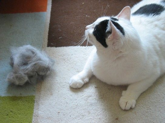Gatos en casa: 25 maneras de eliminar los pelos de gato en casa