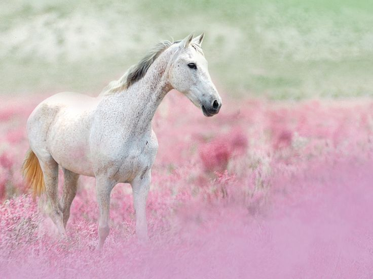 horses and flowers wallpaper - photo #5
