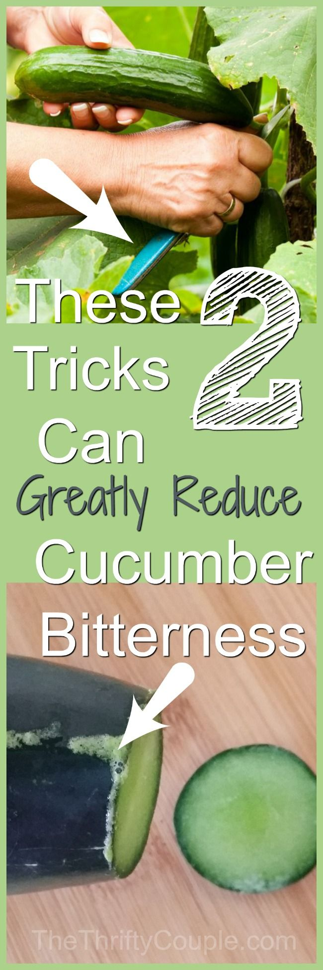 These are great tricks that WORK to reduce the bitterness in cucumbers! If you grow your own or buy them from the grocery store,you have got to do these! Rubbing the cucumber end to the whole veggie is the best, but the other tricks are just as great!
