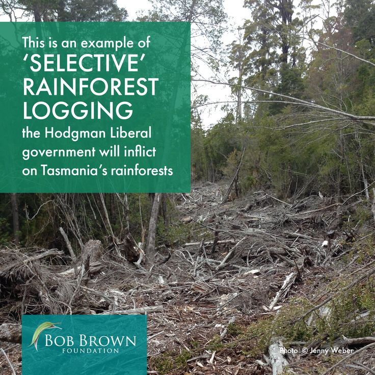 This photograph shows the range and scale of destruction that 'selective' logging inflicts on the rainforest ecosystem.