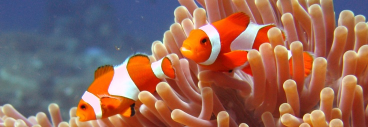 Nemo - always a favourite