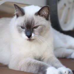 Polkerris Cat - Kitty