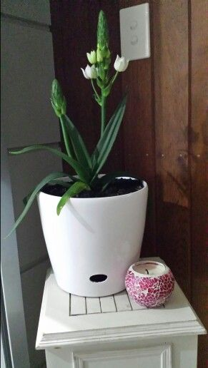 Beautiful plant for alfresco area