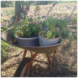 Best Paint For Faded Plastic Garden Pots