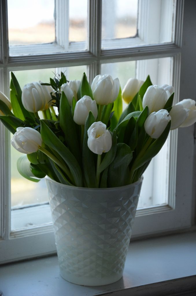 Beautiful white tulips in a simple white textured pot