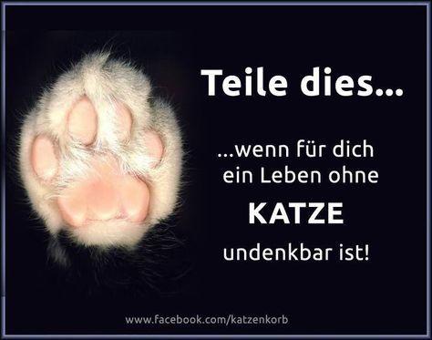 Tierschutz-Aktiv-Friesland – Sprüche, Zitate, Weisheiten & Co. – Katzen