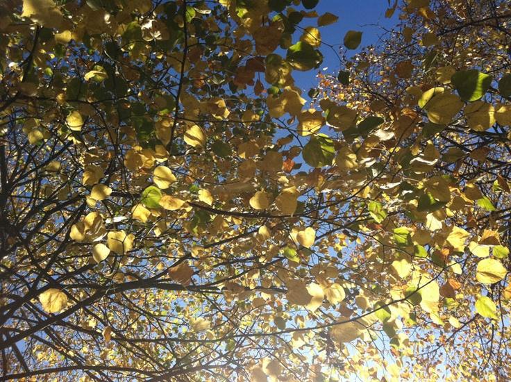 Yellow autumn dayPattern, Yellow Autumn