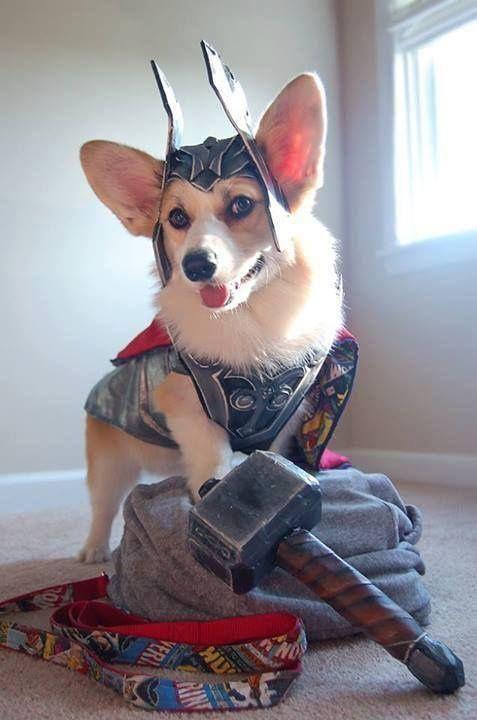 Thorgi: Dog of Thunder. #Thor #Marvel