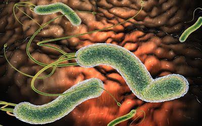Как избавиться от бактерии, которая вызывает у Вас вздутие живота, изжогу, рефлюкс, диарею и другие симптомы ~ Шкатулка рецептов