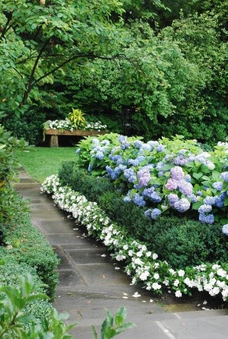 Great garden border combo: Nikko Blue Hydrangeas spill over a line of boxwoods that are contained by a row of Divine White New Guinea Impatiens.