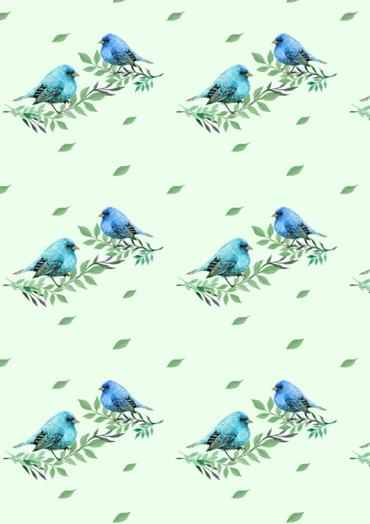 Little pigeon