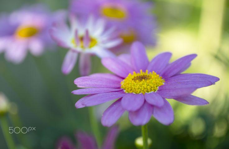Purple flowers - Purple flowers