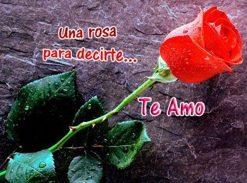 imagenes de flores preciosas con frases de amor