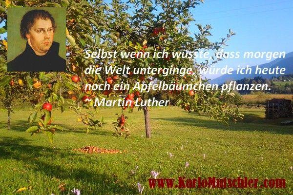 Apfelbäumchen Luther