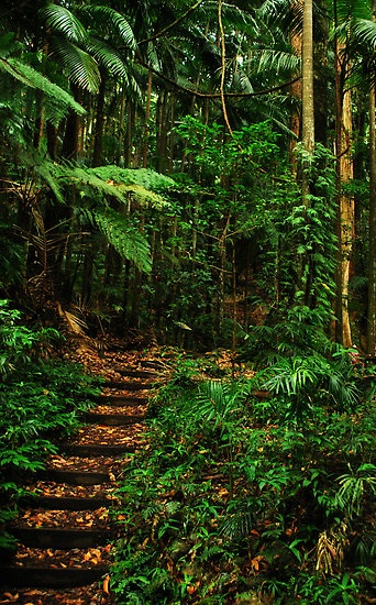 Woolumbin, New South Wales, Australia, a lush green forest photograph to the waterfalls lookout