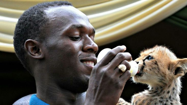 Usain Bolt Rio Olympics 2016 facts you didn't know (Daily Telegraph) Usain Bolt owns a pet cheetah named Lightning Bolt