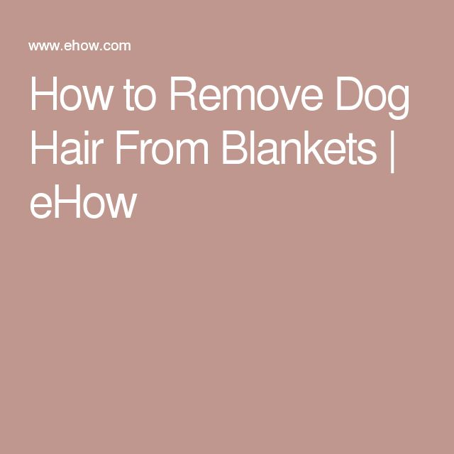 How to Remove Dog Hair From Blankets | eHow
