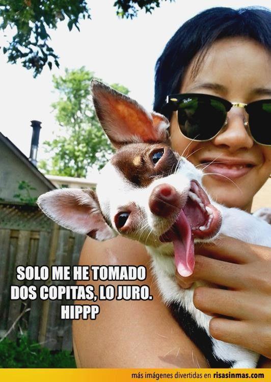 ッ Descubre lo mejor en memes de pokemon go rosa de guadalupe, chistes malos uruguayos, chistes para niños gallegos, gifs con movimiento y chistes malos magoangelesp. ➛ http://www.diverint.com/memes-chistosisimos-dijiste-estabas-operada/