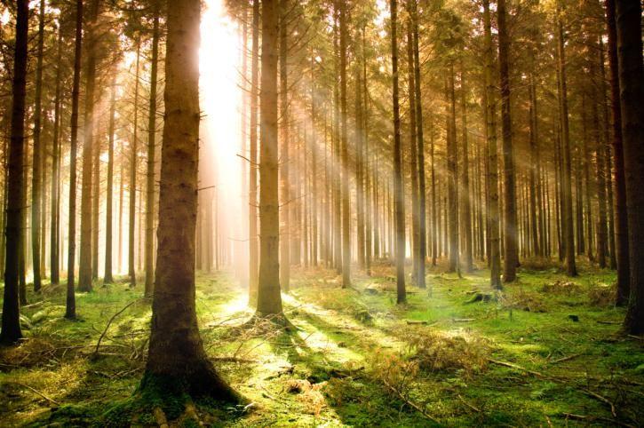Resultado de imagen para recursos naturales renovables