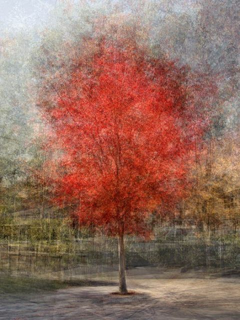 Autumn by Pep Ventosa
