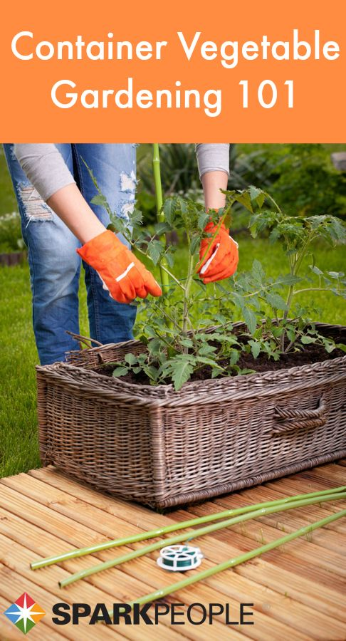 Productive vegetable gardening tips for beginners easy - Container gardening basics ...