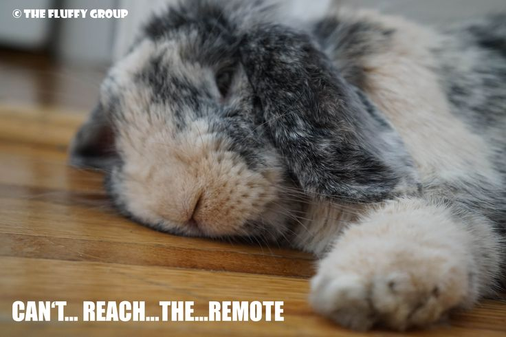Do you ever feel this lazy? :) Follow The Fluffy Group on Instagram, Facebook and Pinterest. Memes, bunny care tips and tricks, and simple adorable photos of the bonded neutered cage-free duo. <3